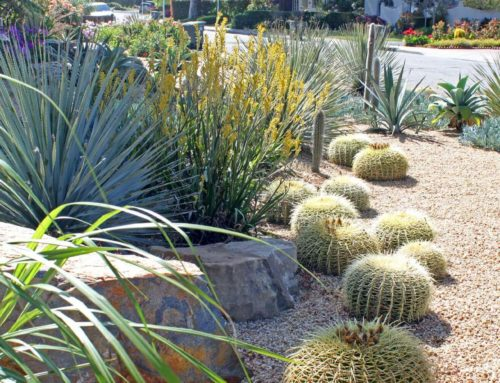 A Sustainable Cacti and Succulent Garden