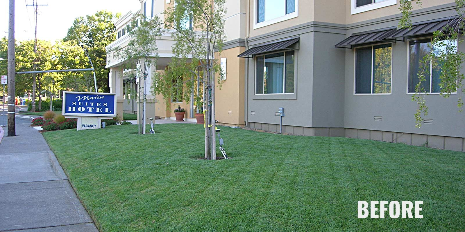 Before - with Lawn