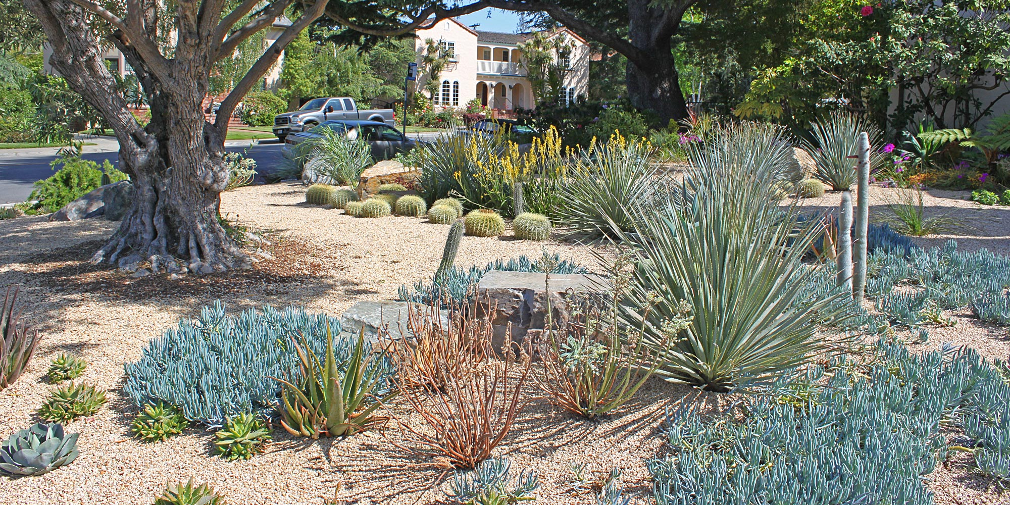 Sustainable Cacti and Succulent Garden
