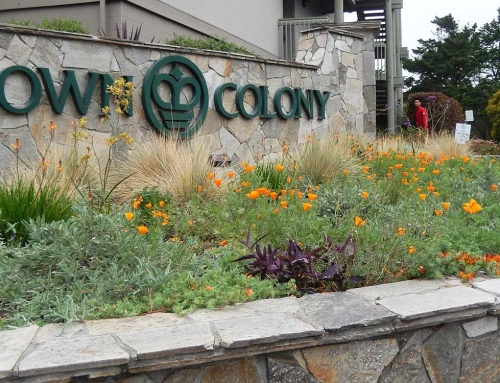 Crown Colony | Sustainable Multi-Family Landscape