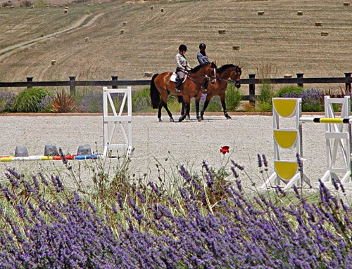 Equestrian Facility Sonoma County