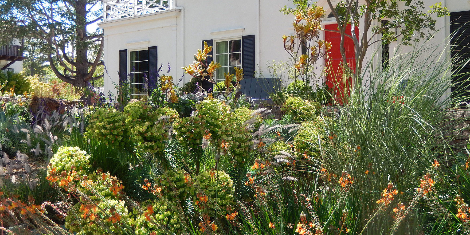 Bulbine, Euphorbia and Kangaroo Paws